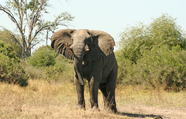 Elephant hunt in Namibia
